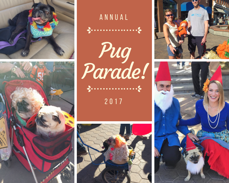 Fort Collins Halloween Pug Parade 2017